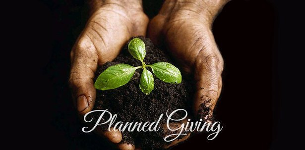 Hands together with dirt and a growing plant
